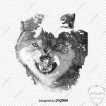 صور ذئب خلفيات و معلومات كاملة عن الذئاب 5