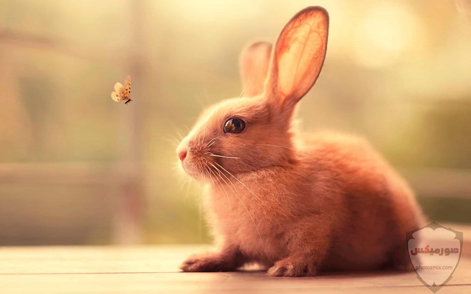 صور رمزيات حيوانات قطط كلاب ارانب كيوت خلفيات حيوانات جميلة للفيس بوك 22