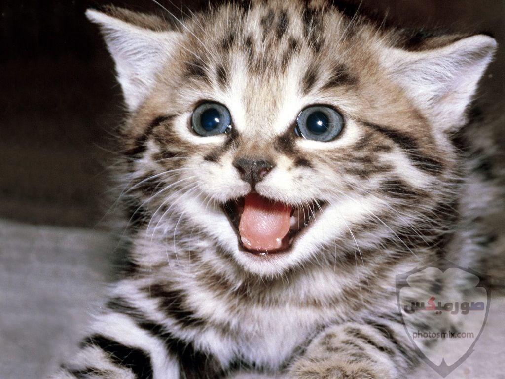 صور رمزيات حيوانات قطط كلاب ارانب كيوت خلفيات حيوانات جميلة للفيس بوك 25