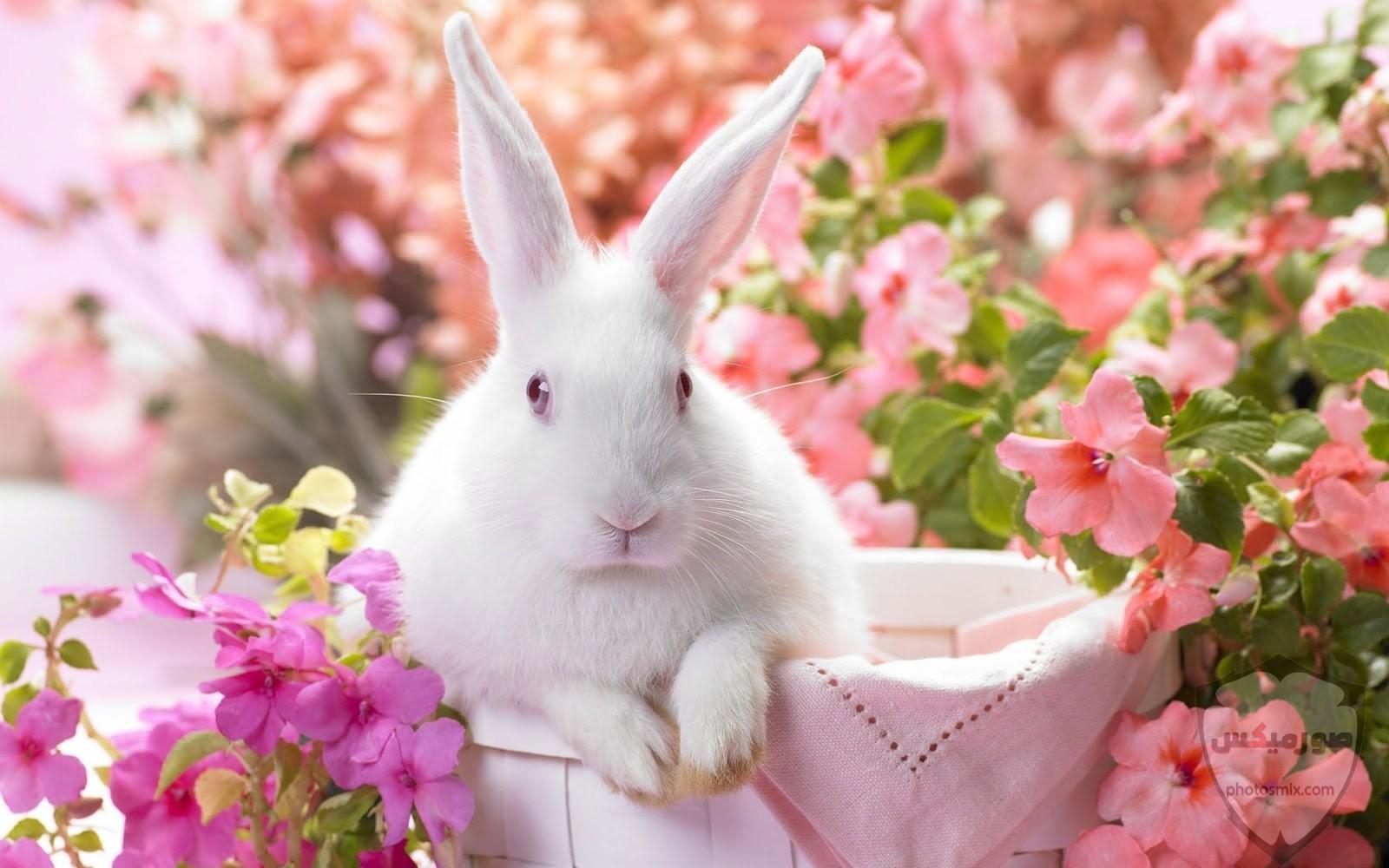 صور رمزيات حيوانات قطط كلاب ارانب كيوت خلفيات حيوانات جميلة للفيس بوك 27