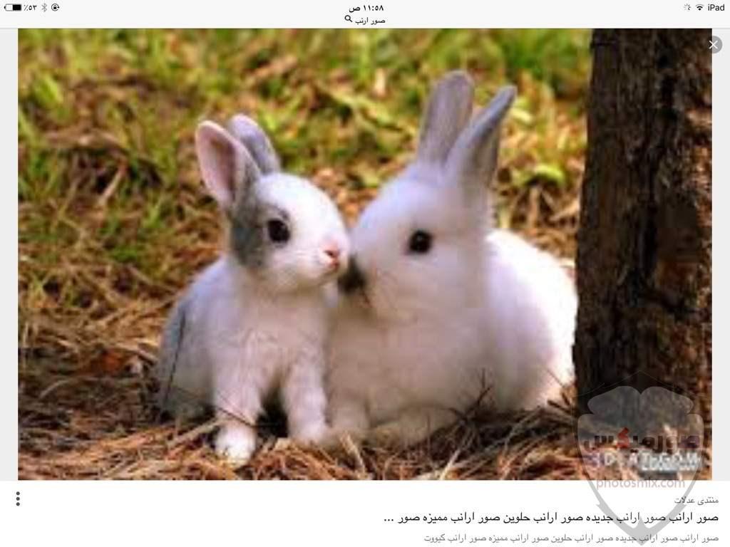 صور رمزيات حيوانات قطط كلاب ارانب كيوت خلفيات حيوانات جميلة للفيس بوك 29