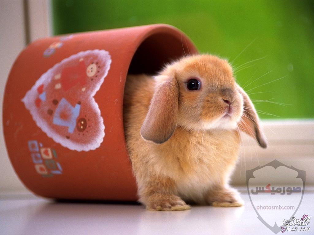 صور رمزيات حيوانات قطط كلاب ارانب كيوت خلفيات حيوانات جميلة للفيس بوك 8