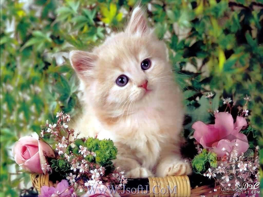 صور رمزيات حيوانات قطط كلاب ارانب كيوت خلفيات حيوانات جميلة للفيس بوك 9