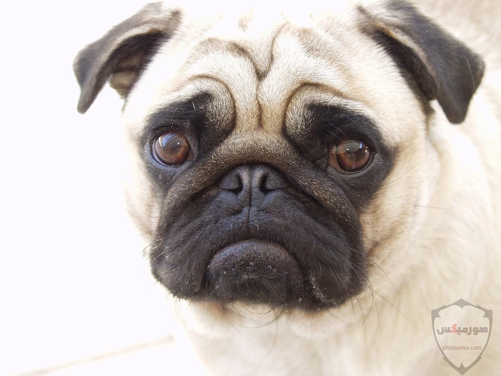 صور رمزيات خلفيات كلاب كيوت صورة كلب كيوت جدا 10