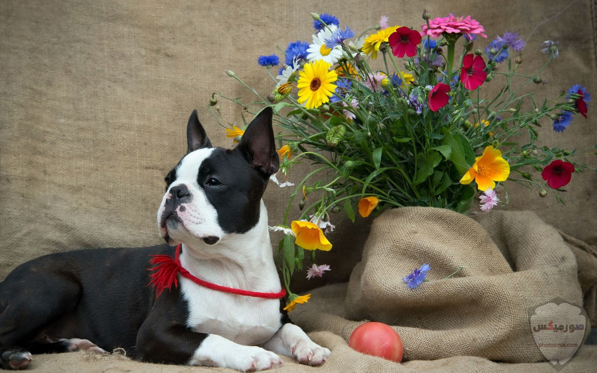 صور رمزيات خلفيات كلاب كيوت صورة كلب كيوت جدا 12