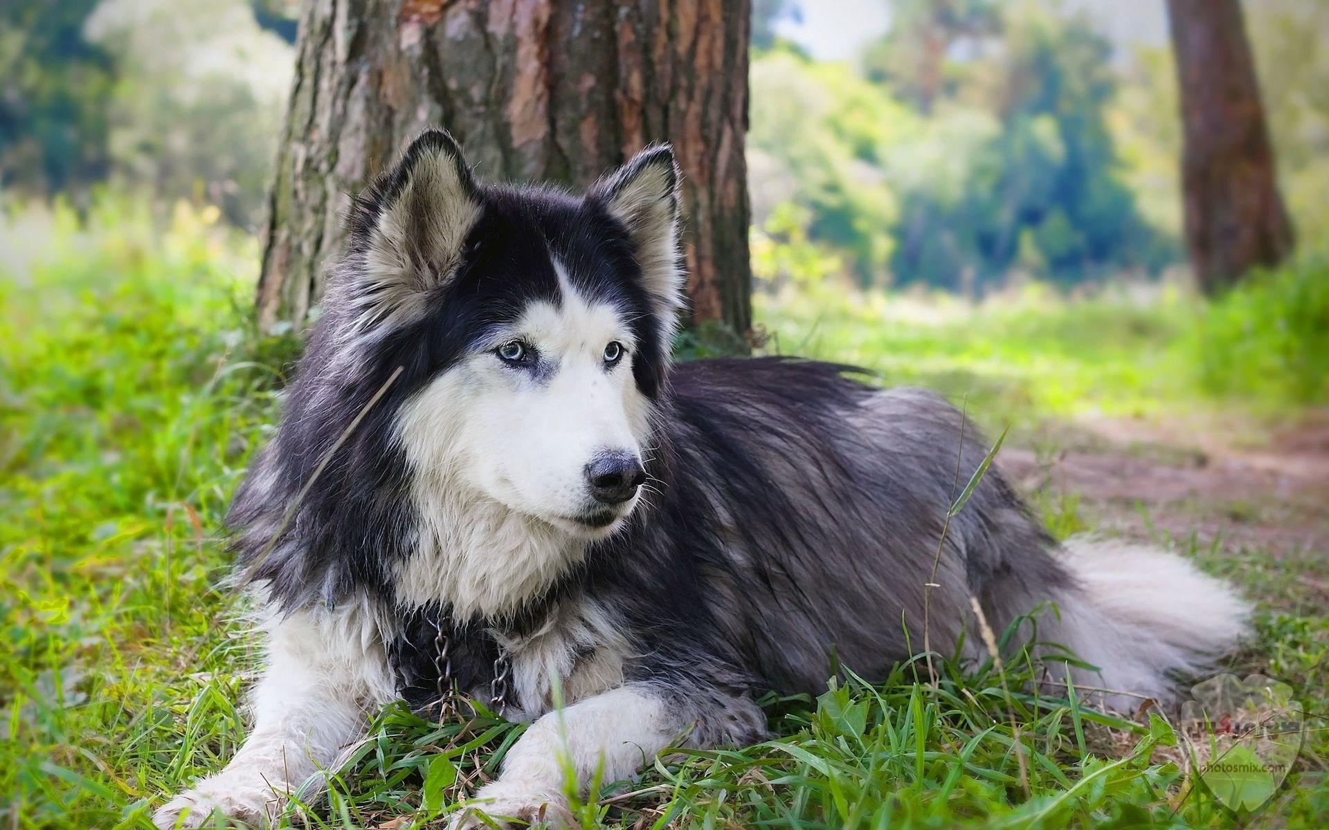 صور رمزيات خلفيات كلاب كيوت صورة كلب كيوت جدا 15