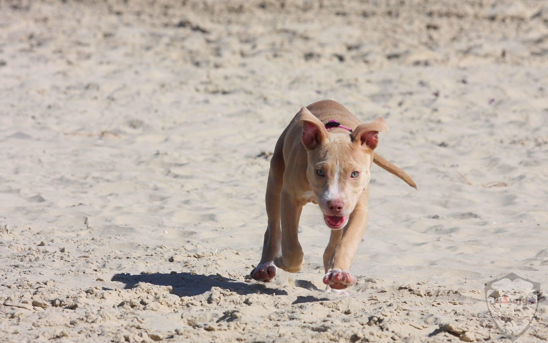 صور رمزيات خلفيات كلاب كيوت صورة كلب كيوت جدا 16
