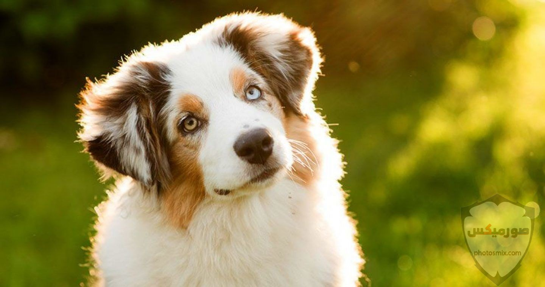 صور رمزيات خلفيات كلاب كيوت صورة كلب كيوت جدا 19