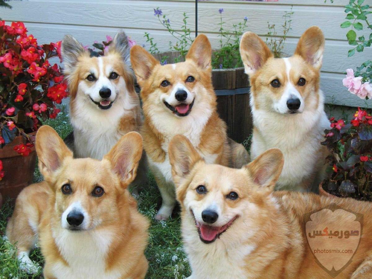 صور رمزيات خلفيات كلاب كيوت صورة كلب كيوت جدا 20