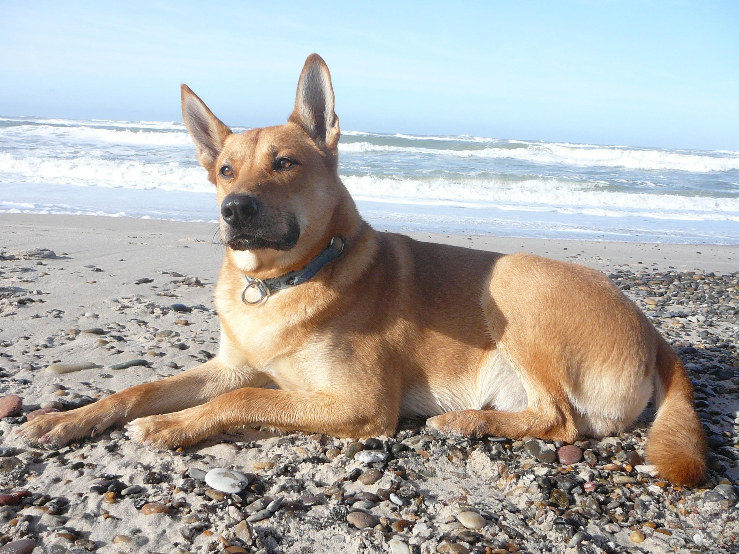 صور رمزيات خلفيات كلاب كيوت صورة كلب كيوت جدا 21