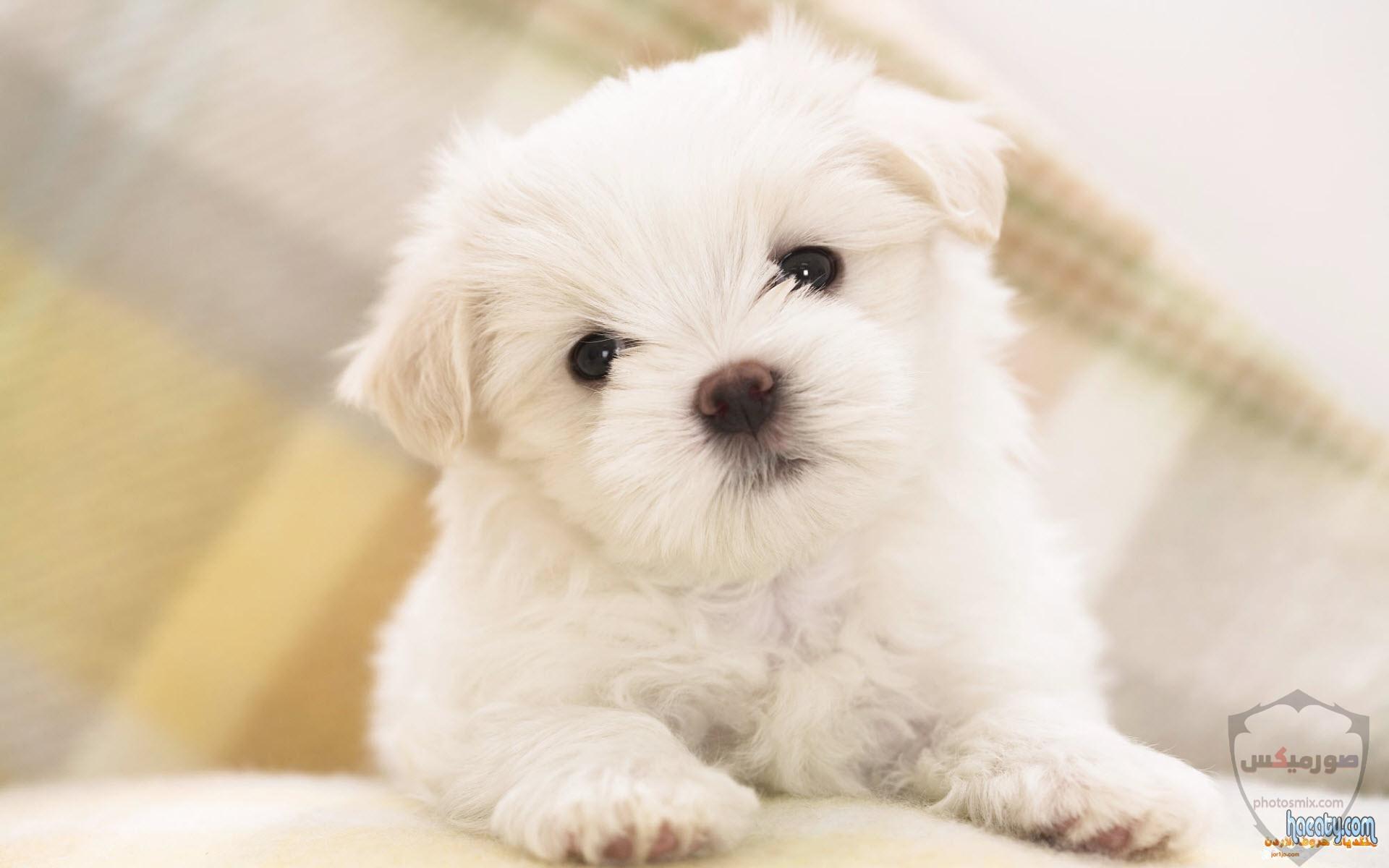 صور رمزيات خلفيات كلاب كيوت صورة كلب كيوت جدا 24