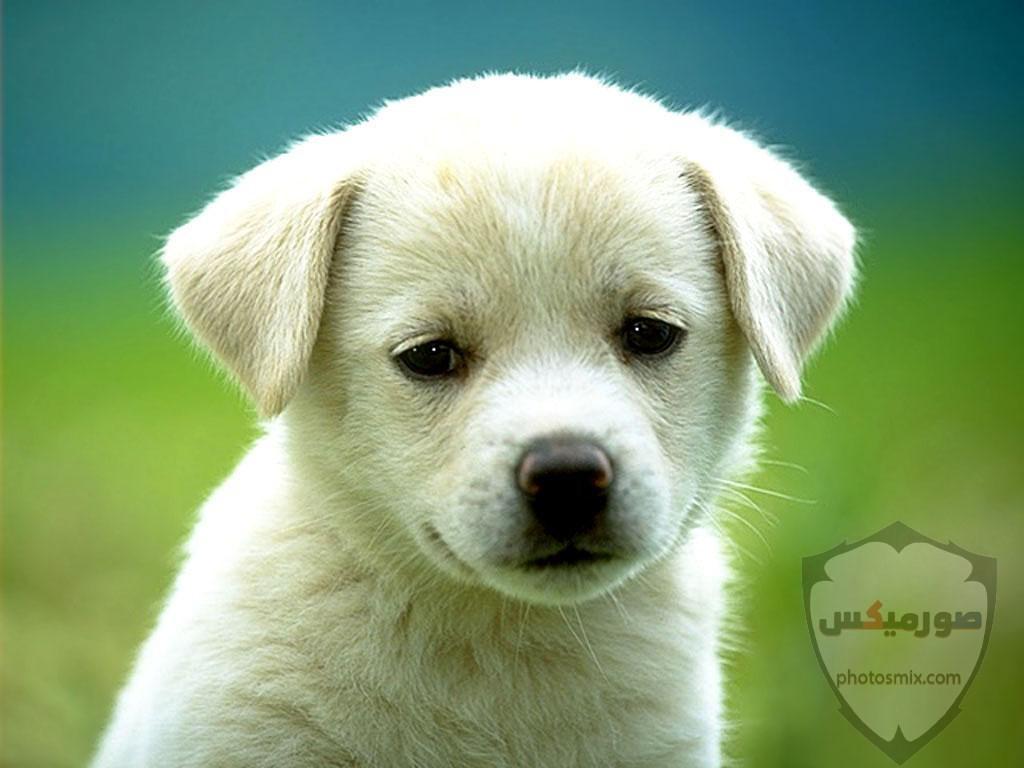 صور رمزيات خلفيات كلاب كيوت صورة كلب كيوت جدا 27