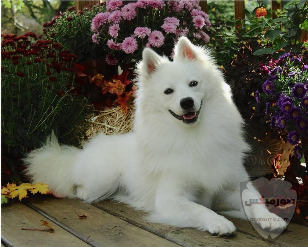 صور رمزيات خلفيات كلاب كيوت صورة كلب كيوت جدا 28