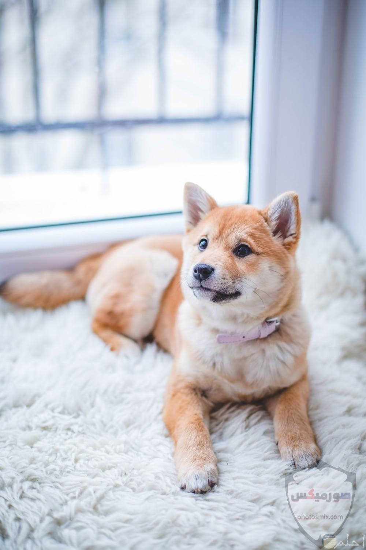صور رمزيات خلفيات كلاب كيوت صورة كلب كيوت جدا 3