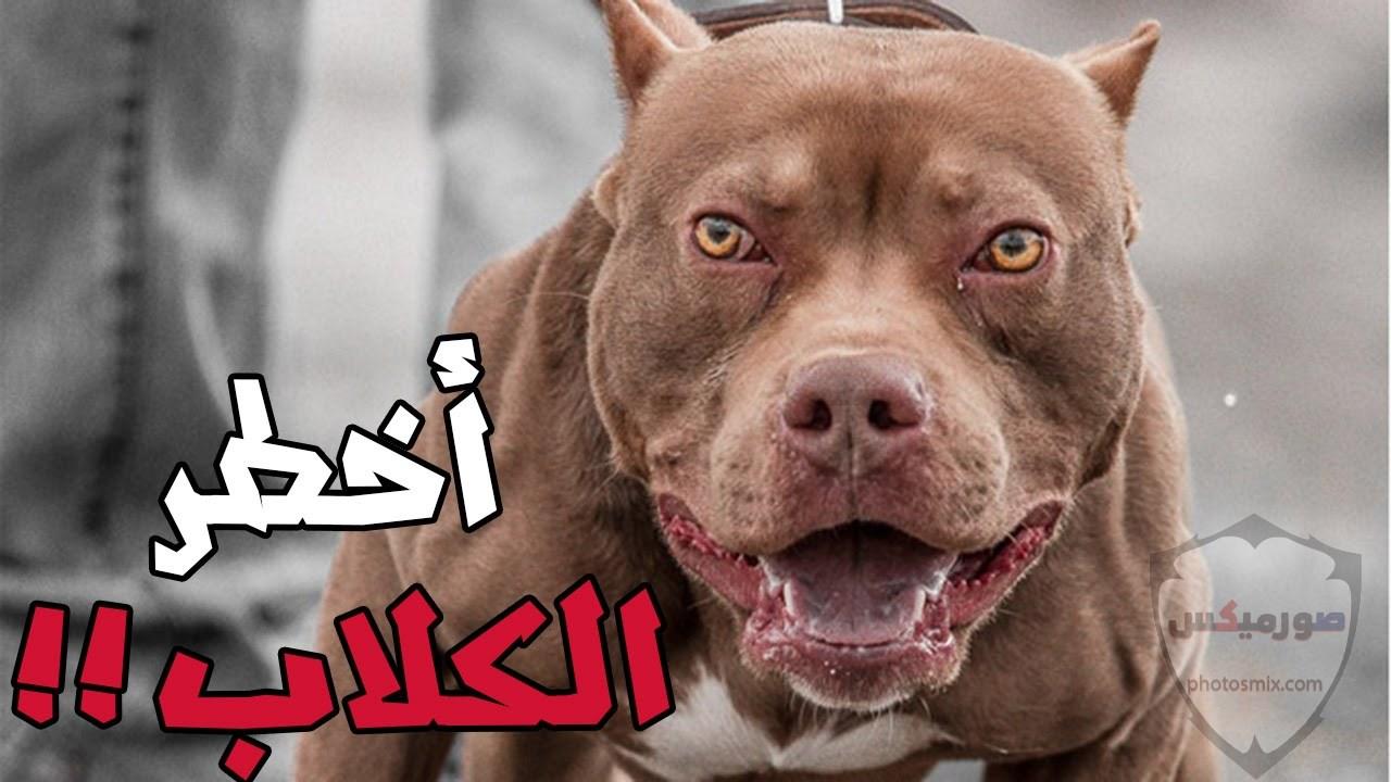 صور رمزيات خلفيات كلاب كيوت صورة كلب كيوت جدا 32