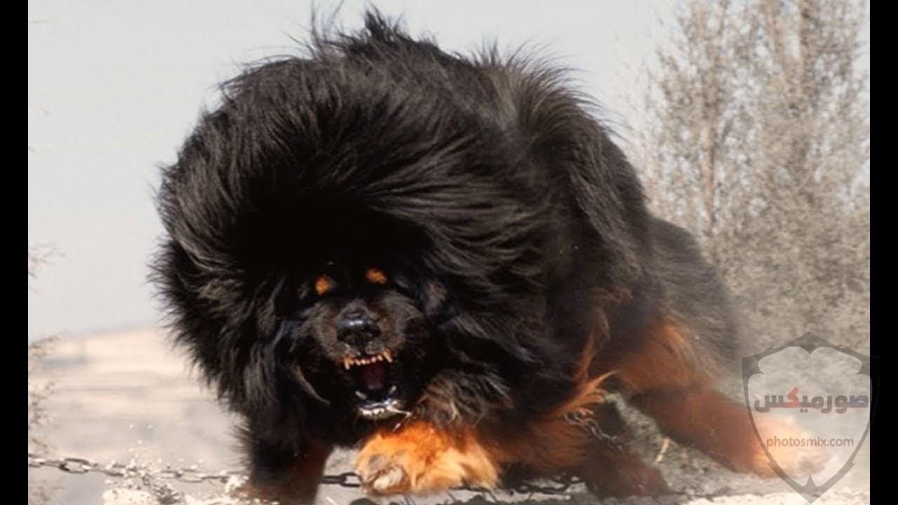 صور رمزيات خلفيات كلاب كيوت صورة كلب كيوت جدا 33