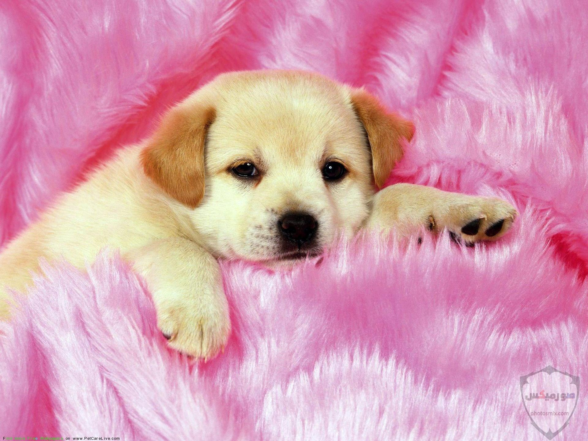 صور رمزيات خلفيات كلاب كيوت صورة كلب كيوت جدا 35