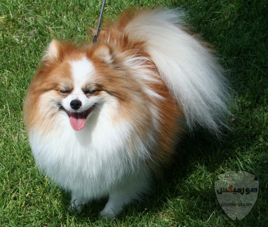 صور رمزيات خلفيات كلاب كيوت صورة كلب كيوت جدا 36
