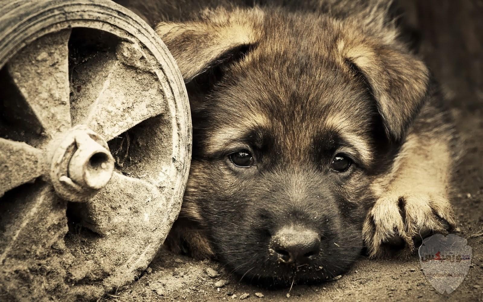 صور رمزيات خلفيات كلاب كيوت صورة كلب كيوت جدا 4
