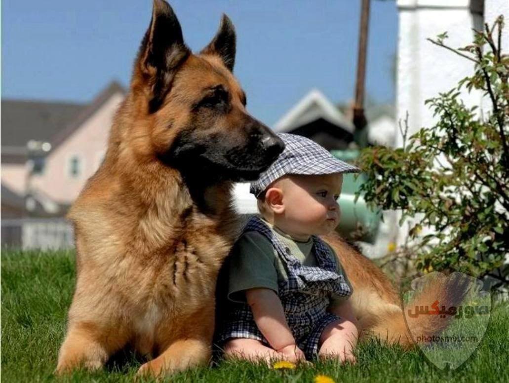 صور رمزيات خلفيات كلاب كيوت صورة كلب كيوت جدا 40