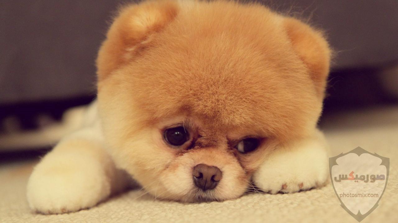 صور رمزيات خلفيات كلاب كيوت صورة كلب كيوت جدا 43