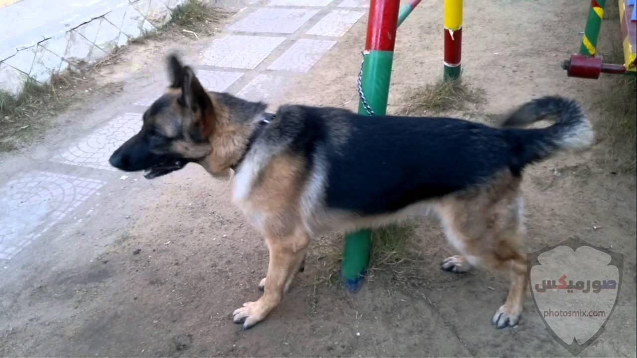 صور رمزيات خلفيات كلاب كيوت صورة كلب كيوت جدا 44