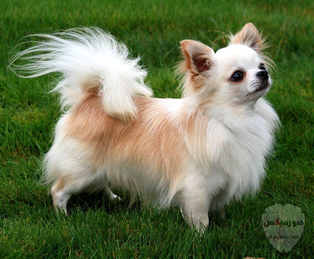 صور رمزيات خلفيات كلاب كيوت صورة كلب كيوت جدا 45
