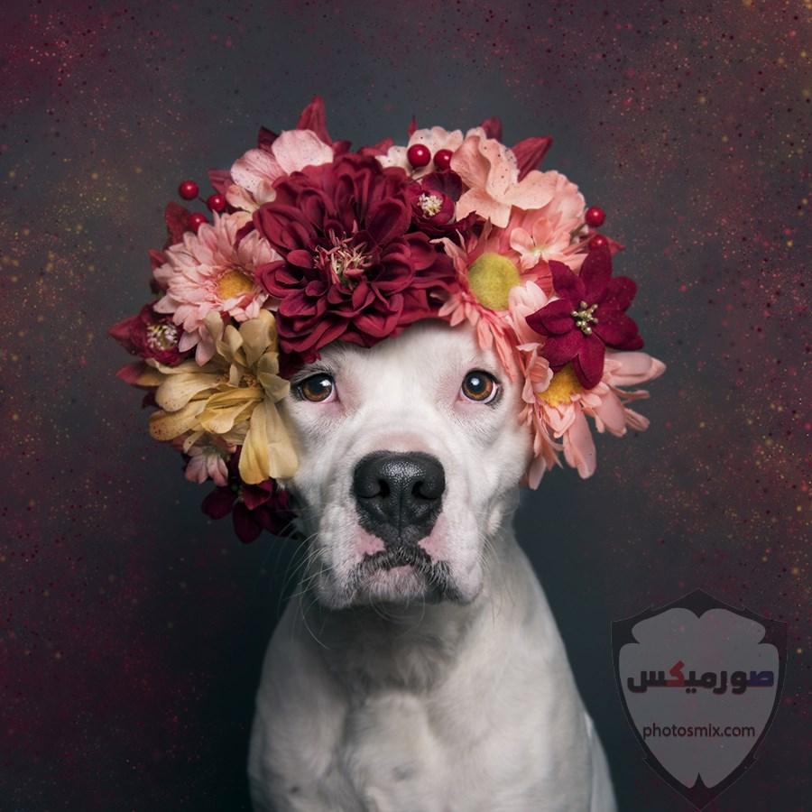 صور رمزيات خلفيات كلاب كيوت صورة كلب كيوت جدا 48