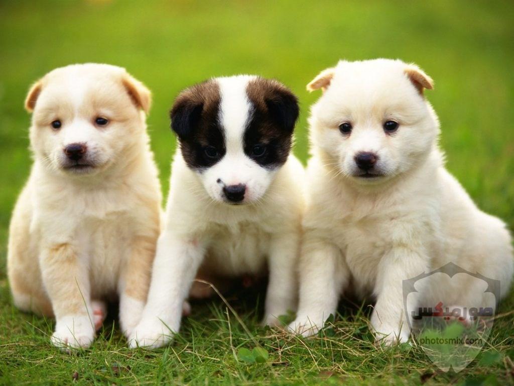 صور رمزيات خلفيات كلاب كيوت صورة كلب كيوت جدا 50