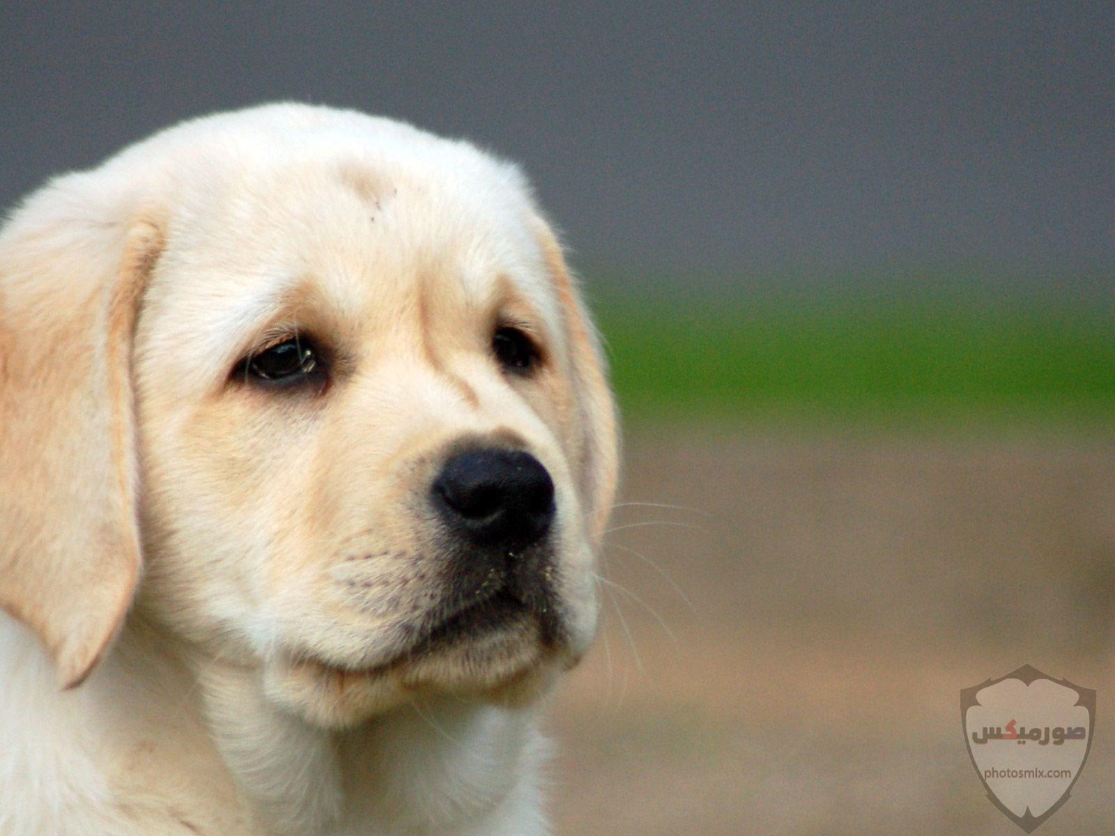صور رمزيات خلفيات كلاب كيوت صورة كلب كيوت جدا 52