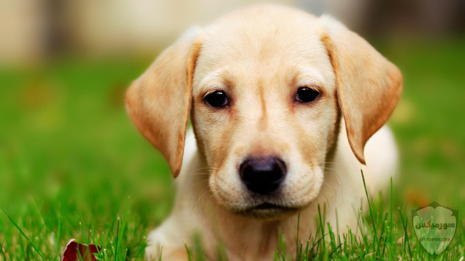صور رمزيات خلفيات كلاب كيوت صورة كلب كيوت جدا 53