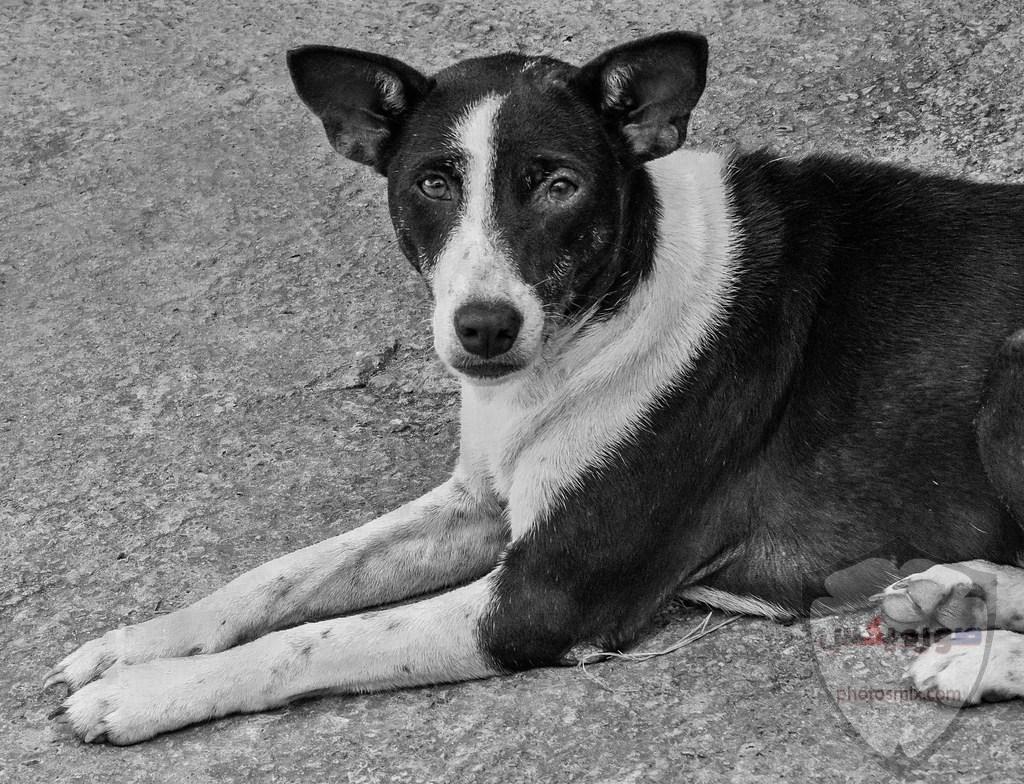 صور رمزيات خلفيات كلاب كيوت صورة كلب كيوت جدا 54