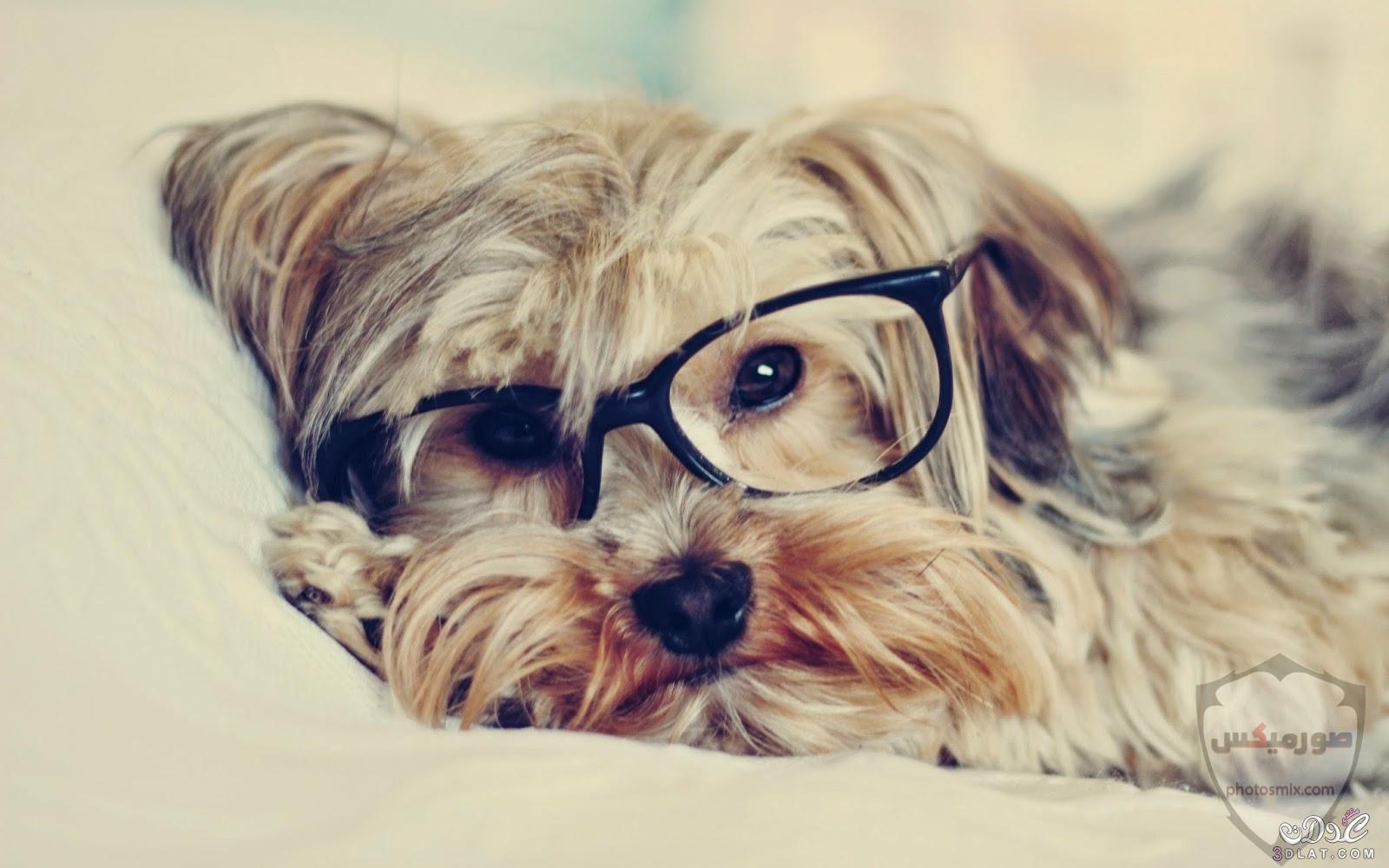صور رمزيات خلفيات كلاب كيوت صورة كلب كيوت جدا 57