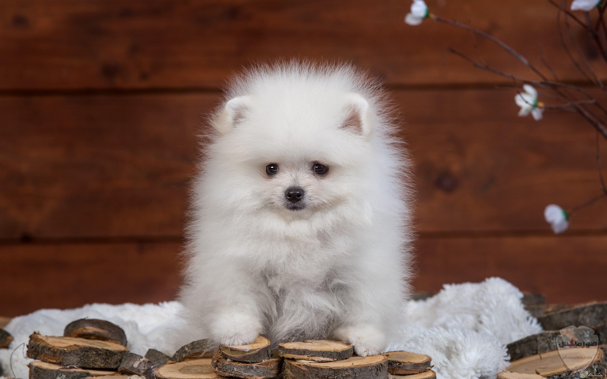 صور رمزيات خلفيات كلاب كيوت صورة كلب كيوت جدا 58