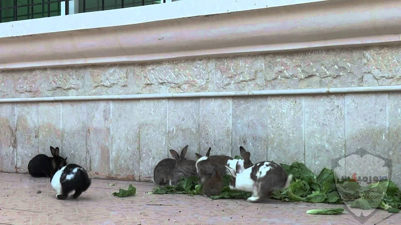 صور رمزيات خلفيات كلاب كيوت صورة كلب كيوت جدا 68