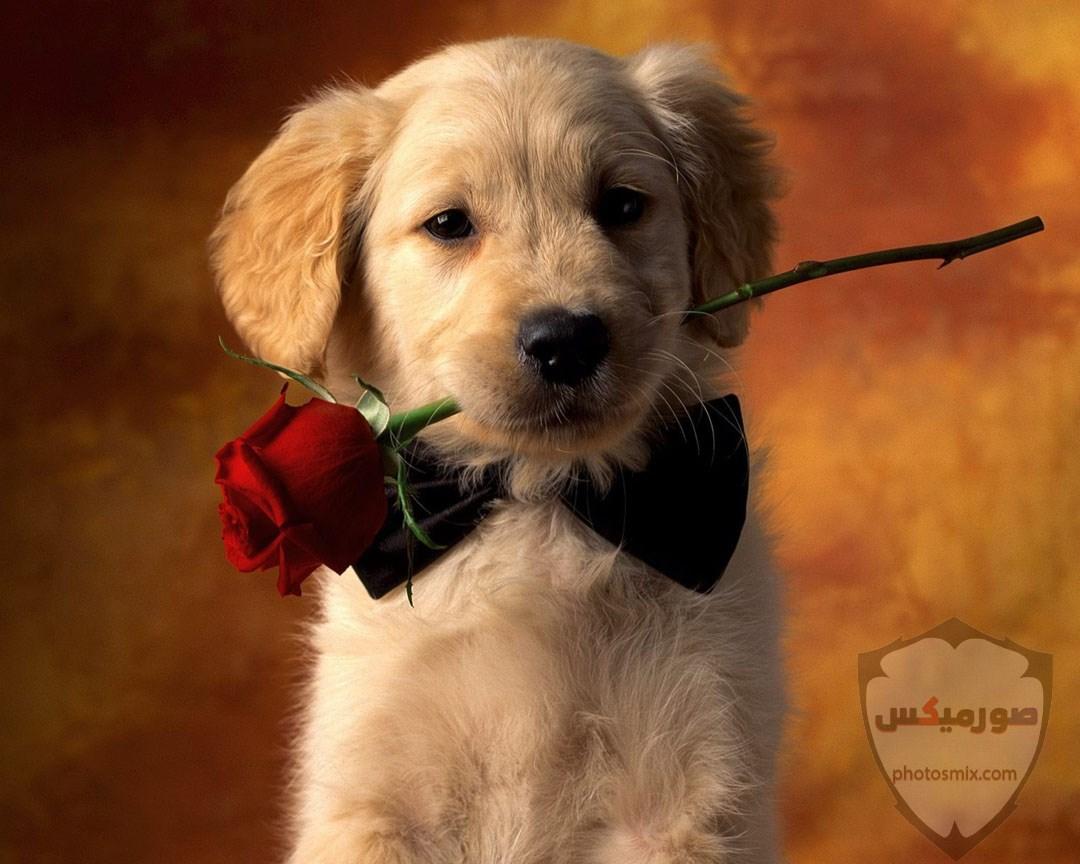 صور رمزيات خلفيات كلاب كيوت صورة كلب كيوت جدا 8