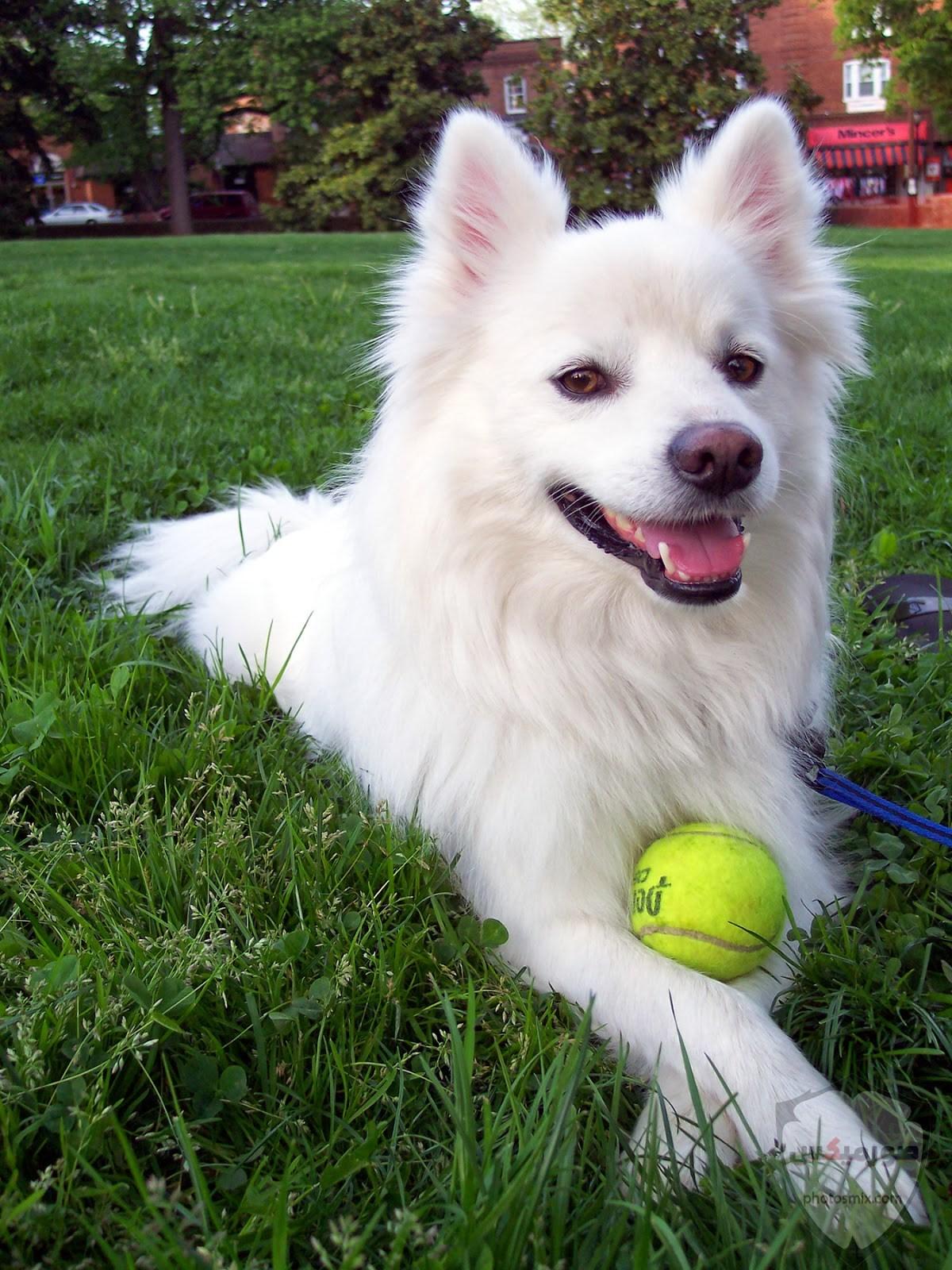 صور رمزيات خلفيات كلاب كيوت صورة كلب كيوت جدا 9