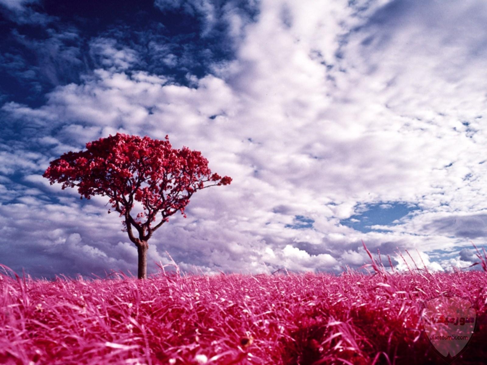 صور طبيعة جميلة صور وخلفيات الطبيعه 2020 أجمل صور للطبيعة 19