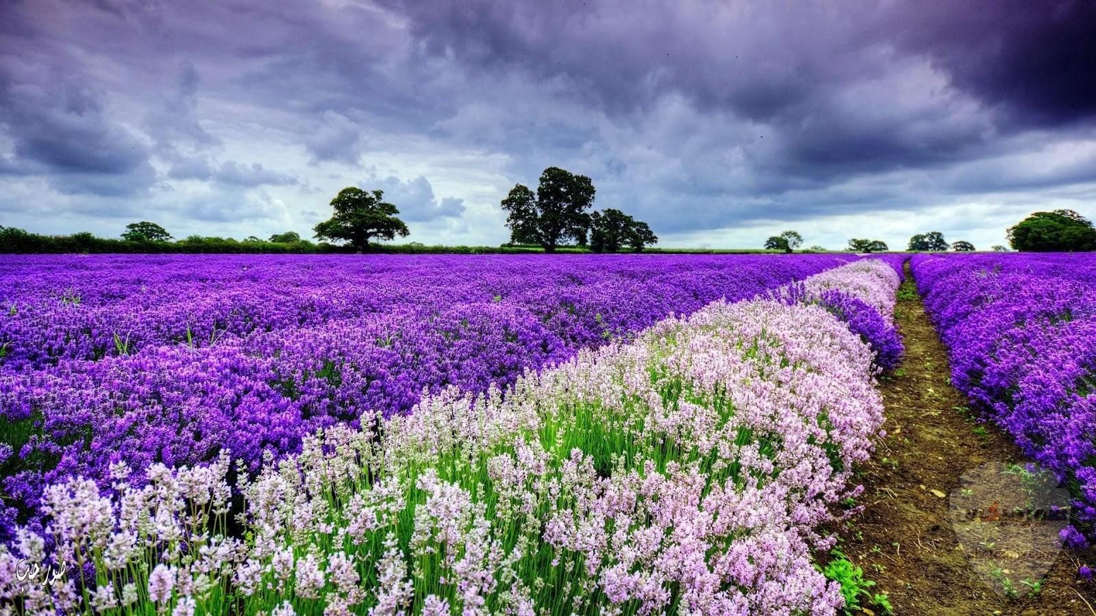صور طبيعة جميلة صور وخلفيات الطبيعه 2020 أجمل صور للطبيعة 27
