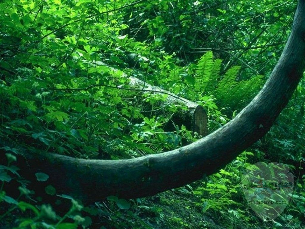 صور طبيعة خلابه 2020 اجمل صور مناظر طبيعيه جميلة جدا و افضل مناضر طبيعية لورود و اشجار و غابات جميله جدا جدا جدا 3