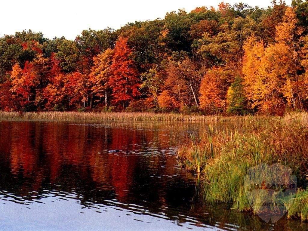 صور طبيعة خلابه 2020 اجمل صور مناظر طبيعيه جميلة جدا و افضل مناضر طبيعية لورود و اشجار و غابات جميله جدا جدا جدا 5