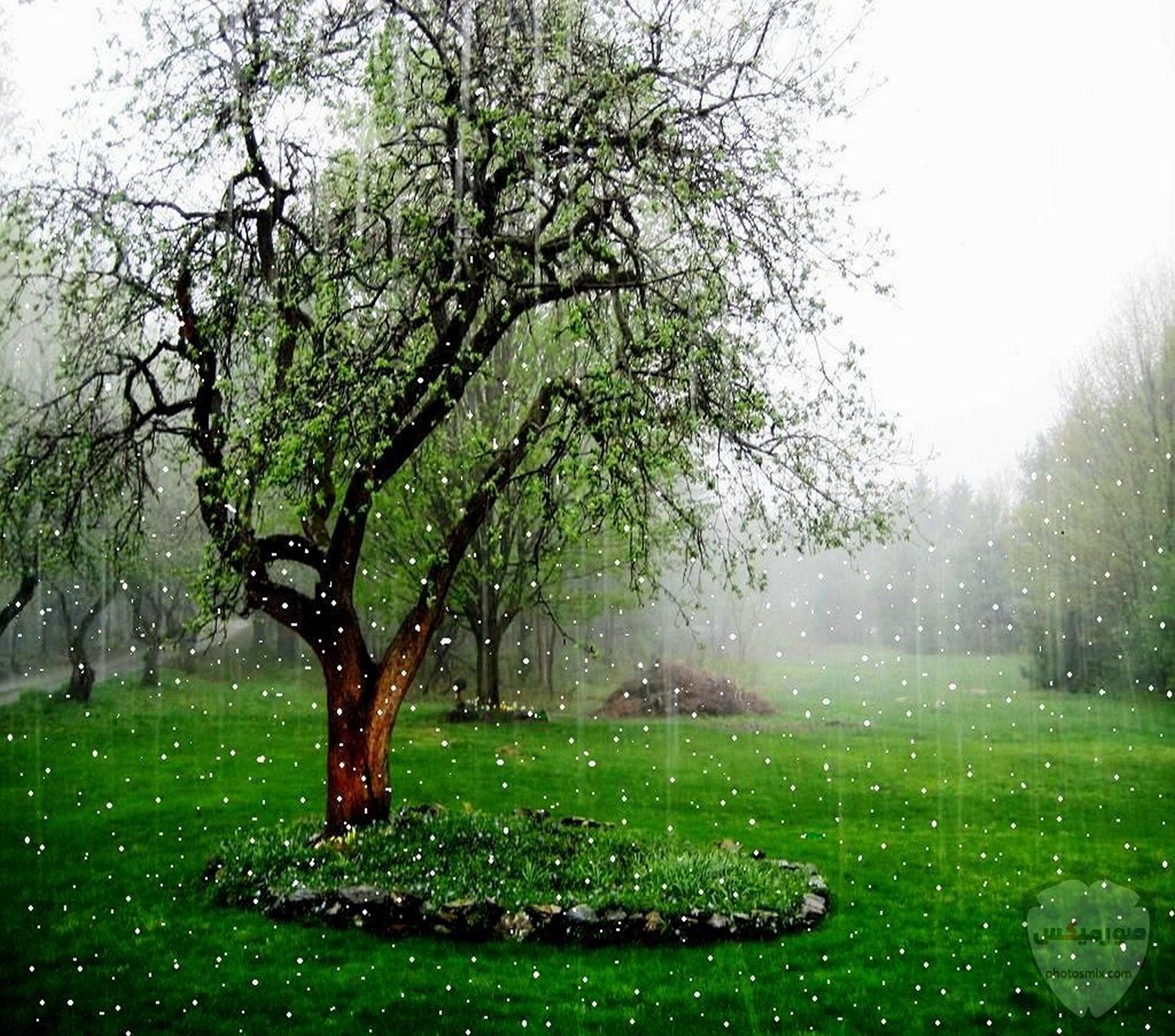 صور مطر جميلة اجمل خلفيات قطرات المطر ادعية عن الامطار والشتاء 12 1