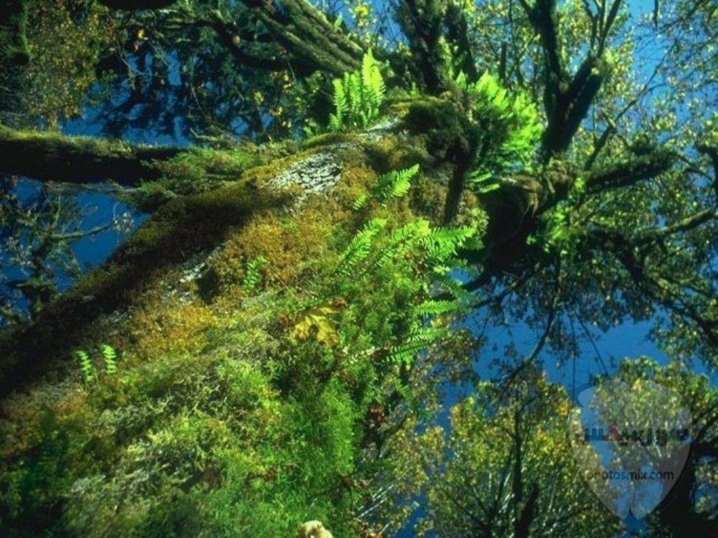 ور طبيعة 2020 صور للطبيعة الخلابة 2020 6
