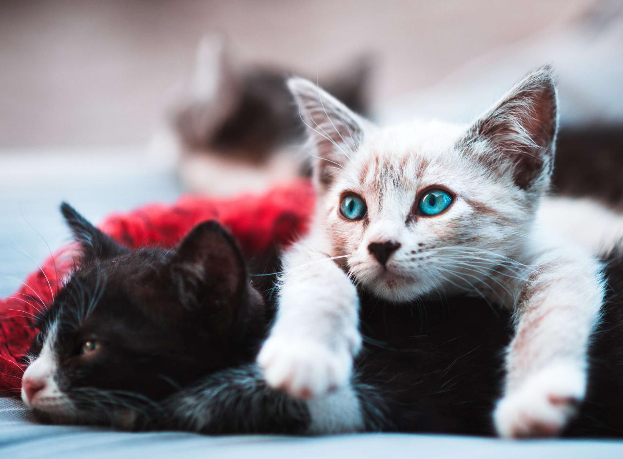 خلفيات قطط كيوت جدا 11
