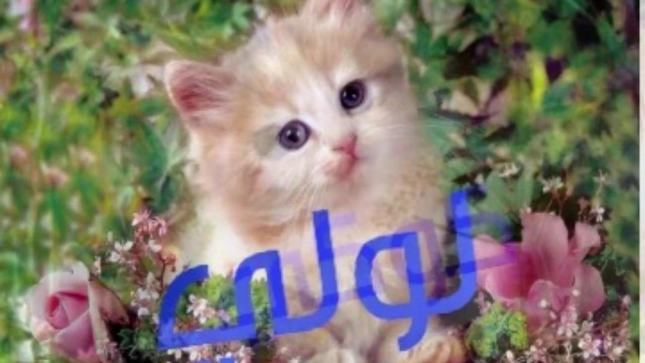 خلفيات قطط كيوت جدا 12