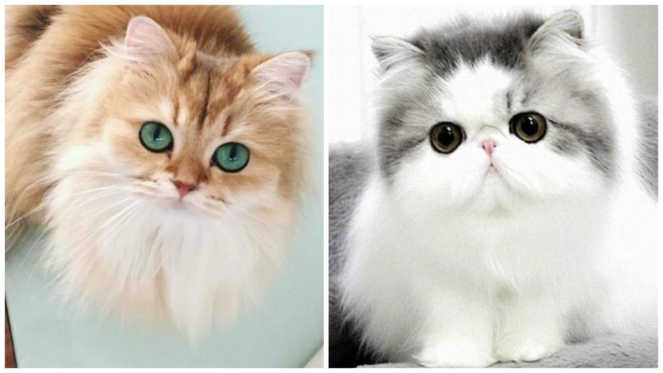خلفيات قطط كيوت جدا 15