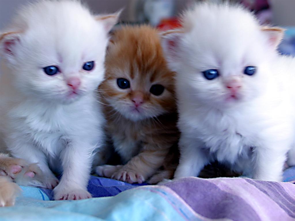 خلفيات قطط كيوت جدا 16