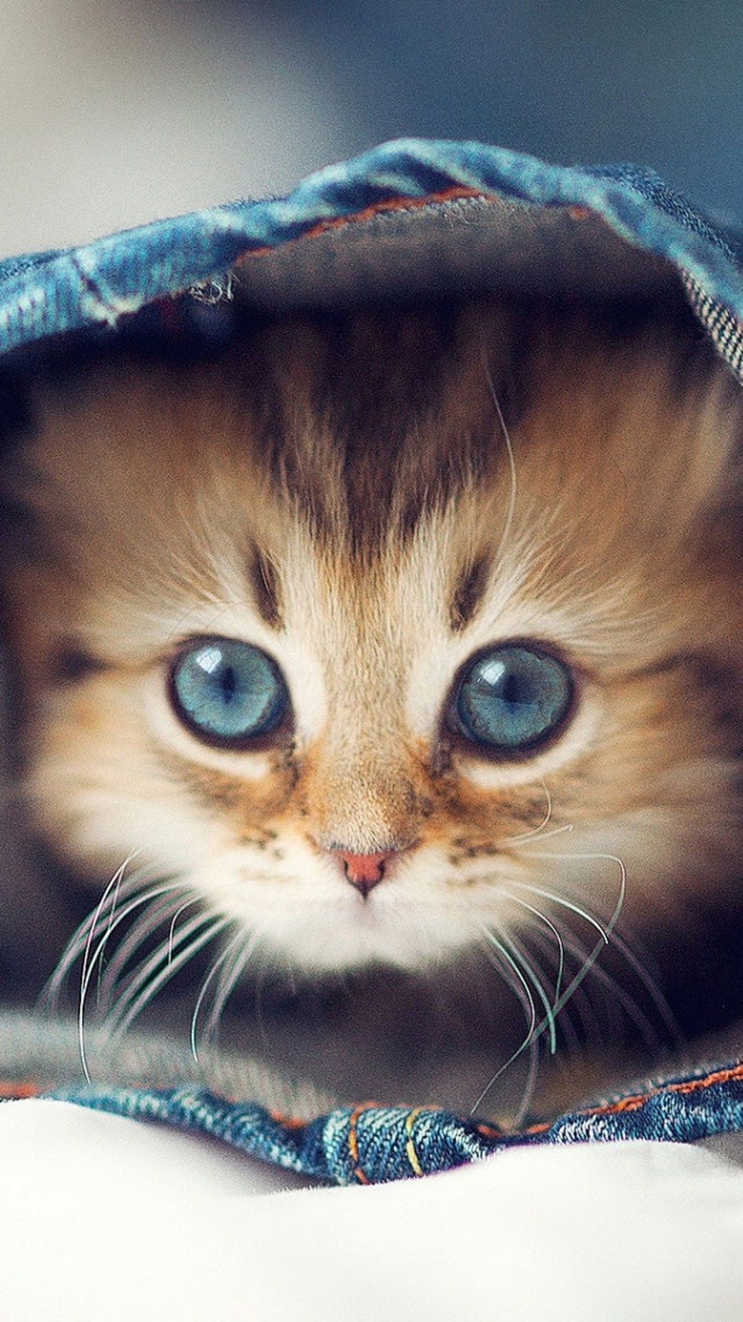 خلفيات قطط كيوت جدا 18