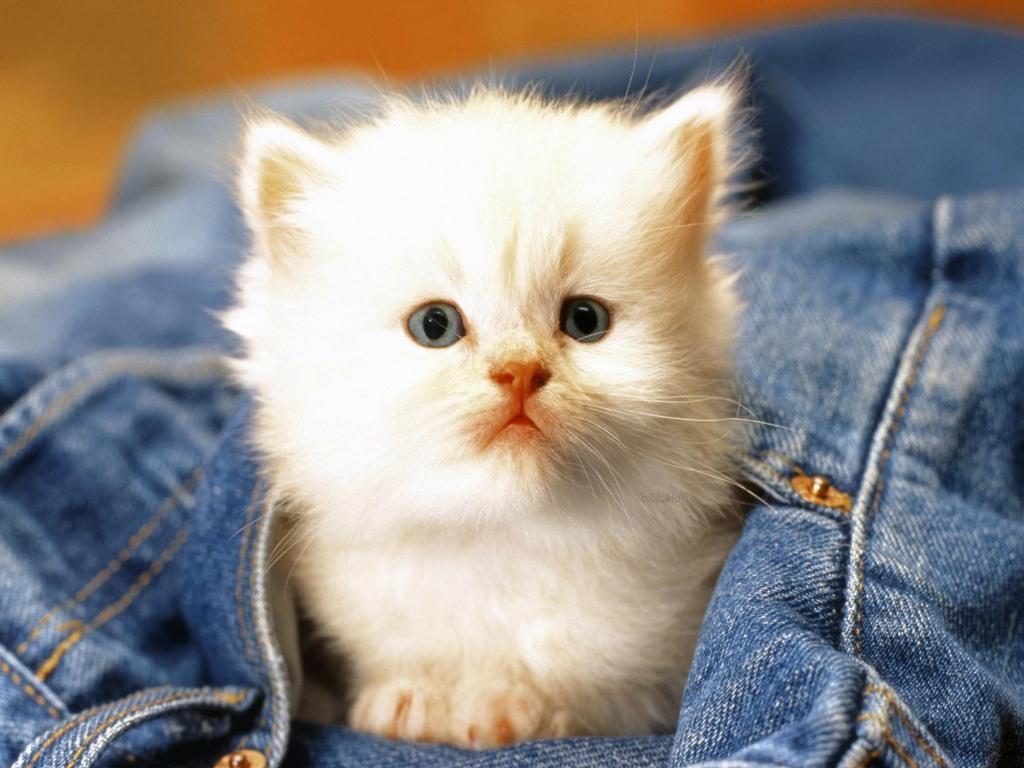 خلفيات قطط كيوت جدا 19