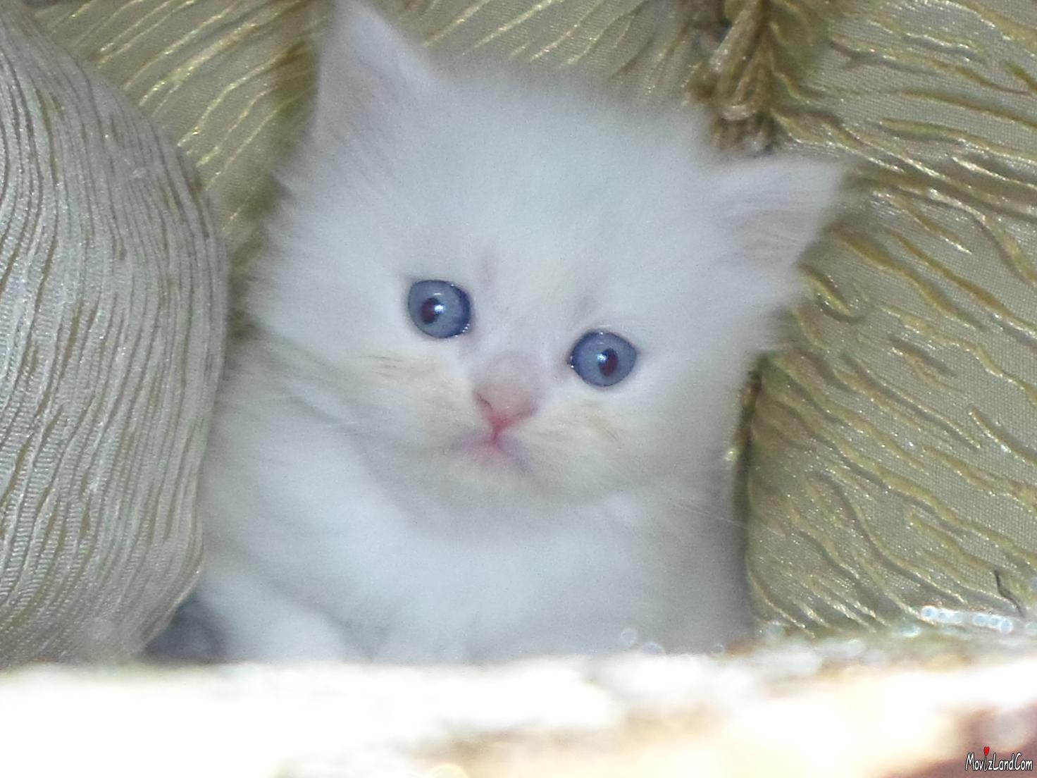 خلفيات قطط كيوت جدا 20